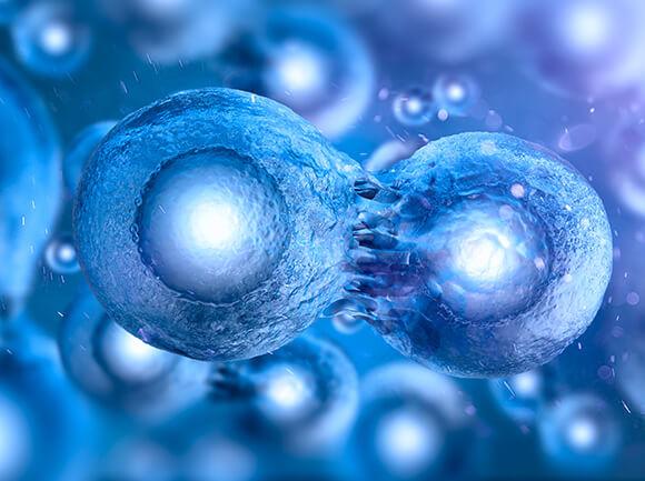 Stem Cells - Blood, Brain, Heart, Bone