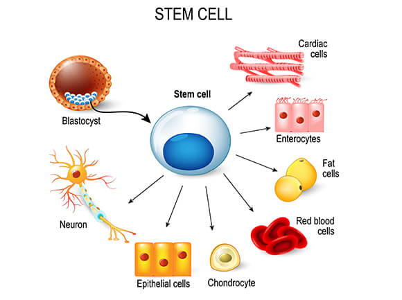 Stem Cell Chart - Sources